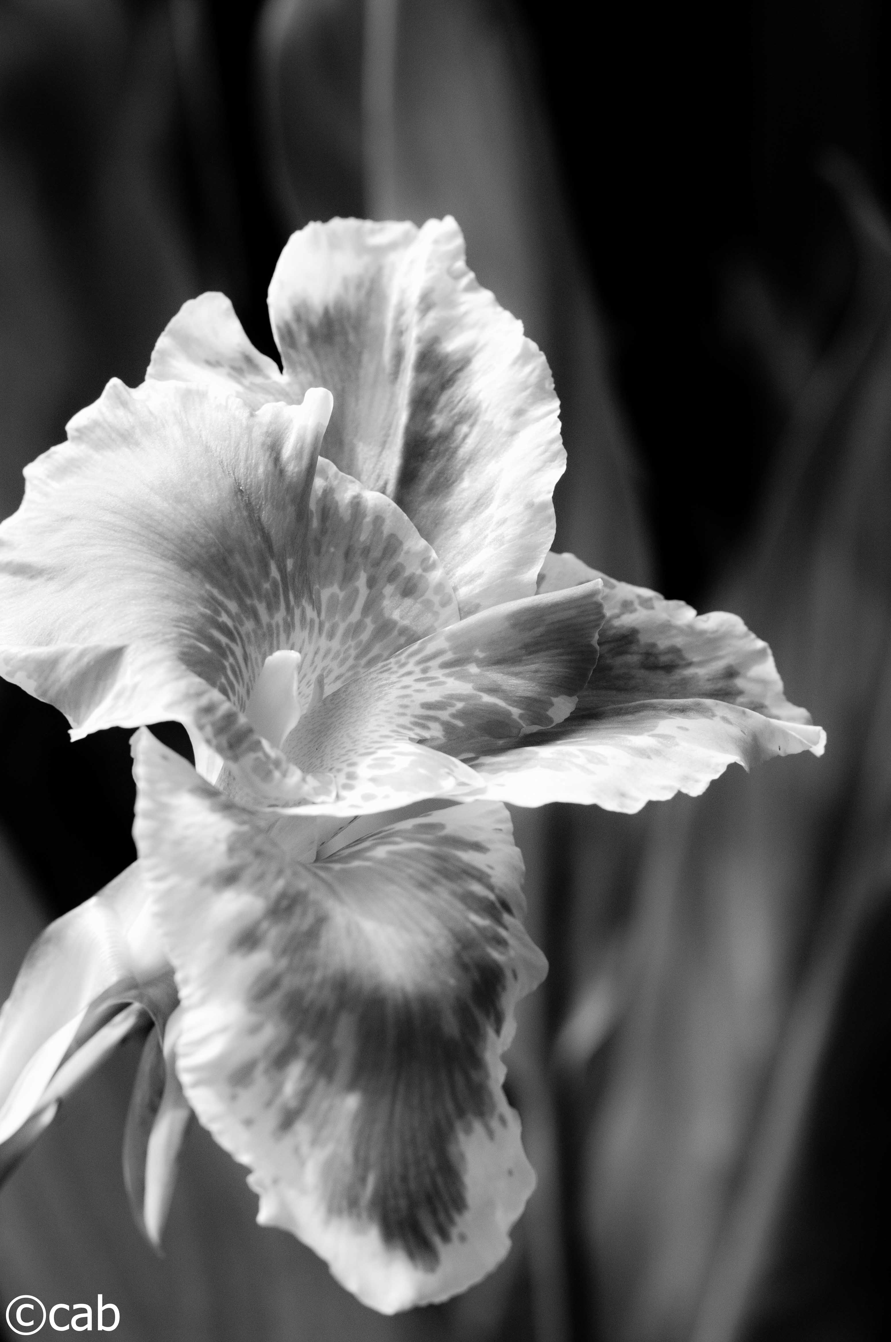 Nature In Black And White Cecilevision